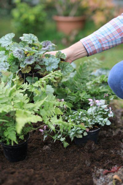 Fotoproduktion im Garten mit Pflanzen und Autor